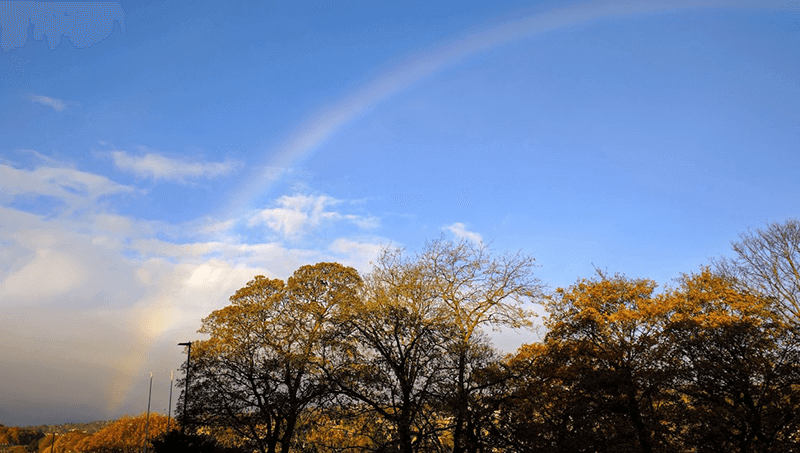 A rainbow over autumnal trees